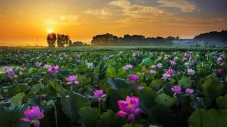 中国第一莲香广昌, 1300年种植历史, 大雄教你炒莲