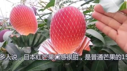 品种珍奇, 全球最贵, 日本红芒果农场是怎样做到的