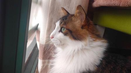 猫咪知道自己大限将至都选择离家出走