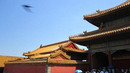 为何过去600多年来, 故宫的房顶从来没有鸟粪? 专
