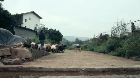 农村农民放羊利器, 主人轻松管理东奔西跑的整个羊群, 太厉害了!