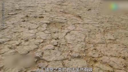荒漠化逼出来的神器, 一天啃光20亩沙漠, 印度: