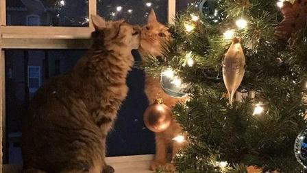 每日一囧 2018:有宠物的家庭准备的圣诞树果然与众不同