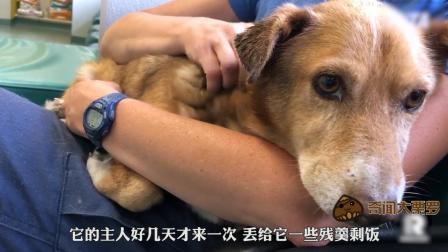 暖心! 被主人关了12年的老狗终被解放了, 它的余