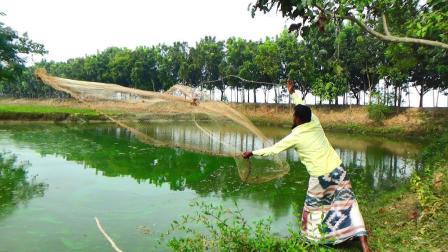 一片绿油油的水塘里, 农村大叔奋力撤了一网, 看看能不能网到鱼?