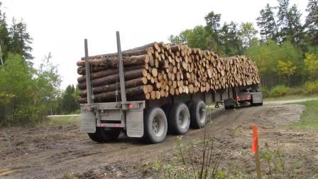 牛人驾驶森林卡车运输木材, 转弯那一刻差点翻车