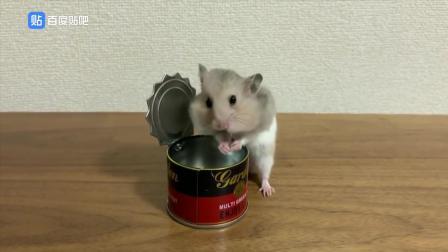 偷吃罐頭的小倉一點都不怕被逮到, 吃的真香, 真是十足的小吃貨