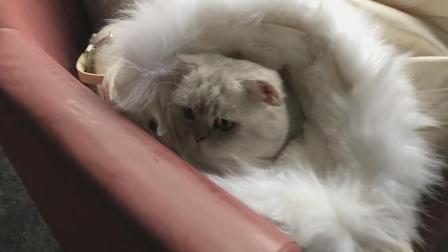 冬天躲在妹子羽绒服里的猫咪, 果然活的不如猫