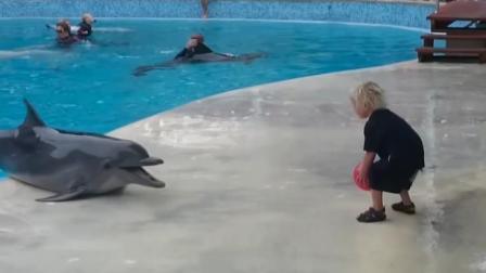 海豚为什么会救人呢? 专家: 只是把人当玩具