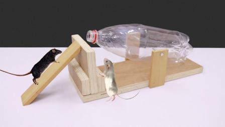 太聪明了, 牛人用塑料瓶和木板制作捕鼠陷阱, 简