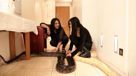 美女在家养了16条蛇, 4米多的巨蟒在家里乱窜, 被蛇咬过无数次!