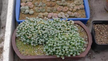 """非洲地上成堆的""""玉石"""", 为什么导游总说一定别捡? 这次真想不到"""