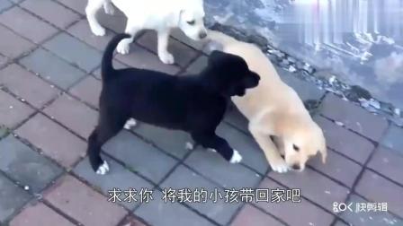 女子看见流浪狗可怜, 买点给它吃的, 没想到它咬