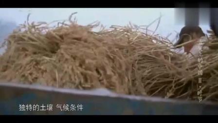 """舌尖上的中国: 中国社会的传统""""贴秋膘""""大部分人都不知道什么意思"""