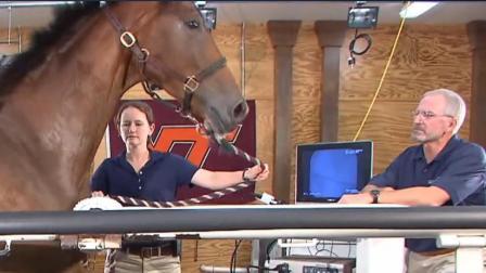 马在跑步机上奔跑, 快到只剩残影! 网友: 用实力证明什么是速度!