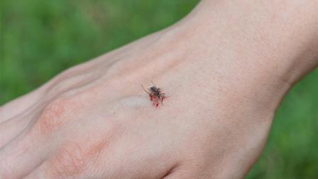如果蚊子叮咬了喝醉酒的人, 蚊子会不会醉?