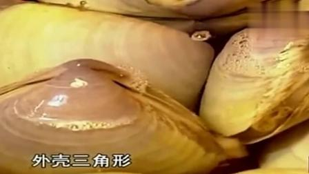 舌尖上的中国: 这里的海鲜市场堪比水族馆! 其中一种都叫不出?