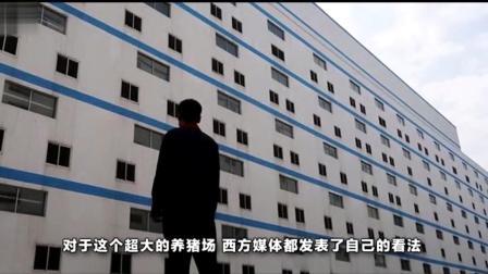 """中国修建""""豪华养猪大楼"""", 最高可达十三层, 引"""
