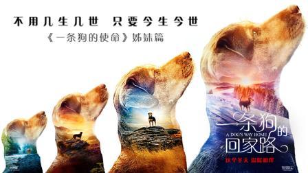 """《一条狗的回家路》""""心之所向""""版预告片 贝拉横跨四季为爱归来"""