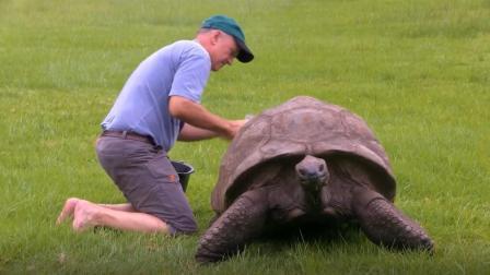 英国神龟出生于18世纪, 经历两次世界大战, 熬死