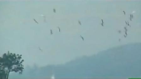 来到小鸟天堂,能看到百鸟归巢的景观,联想到巴金先生描述的景色