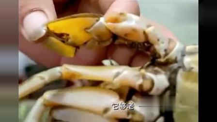 舌尖上的中国: 顶级黄油蟹美味独特