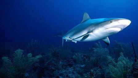 为什么鲨鱼不吃潜水员? 它不是凶猛的食肉动物吗? 其实原因很简单