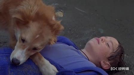 男孩子骑自行车摔昏过去, 聪明的狗给他做急救