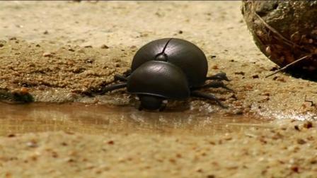 昆虫小世界, 人生大哲理之三