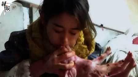 美女人工呼吸救400猪 年入百万