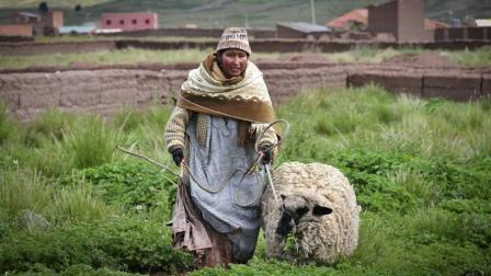 """农村俗语: """"男怕属鸡, 女怕属羊"""", 为什么这么说呢? 有何讲究!"""