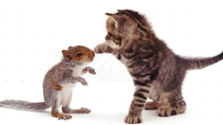 猫鼠棕鞋之恋