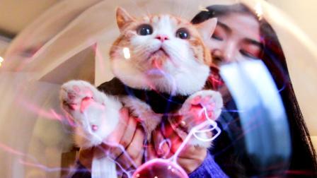 当猫爪接通电流, 神奇的事情发生了! 猫: 请求联络喵星总部!