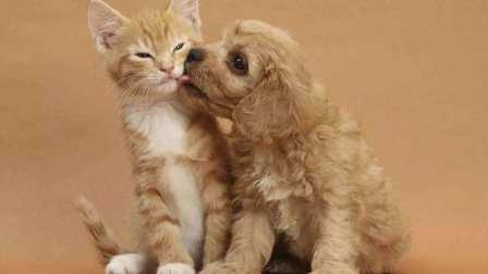 猫子跟狗子坠入爱河天天抱在一起睡觉