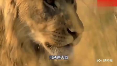 草原上狮群要杀小象, 大象妈妈的力量还是很强大
