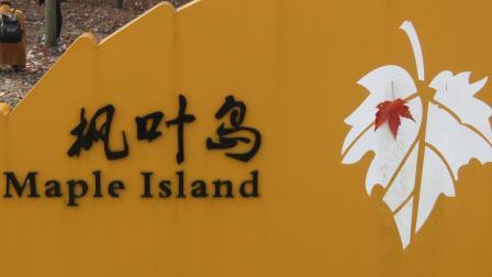 张堰镇摄影班学员廊下枫叶岛采风习作纪实