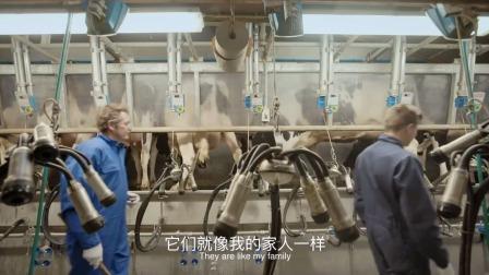外国的牧民养奶牛,播放披头士音乐!牧场机械化管理,令人羡慕!