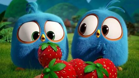 愤怒的小鸟:小蓝鸟哪怕掉下悬崖,也要抢到草莓,结果草莓坏了!