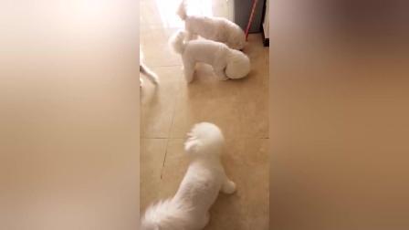 这四小只真的太听话了, 好可爱的小狗狗
