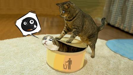 """母猫把孩子扔进垃圾桶! 小猫: """"我一定不是亲生的! """""""