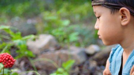 小孩救了一颗千年人参, 谁料十年后, 人参化为美女回来报恩