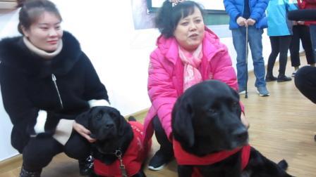 改变中国的那条导盲犬退役了 黑萌萌接过了珍妮的接力棒