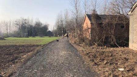 实拍皖北农村, 一半的房屋无人居住, 置身其中让人心惊肉跳