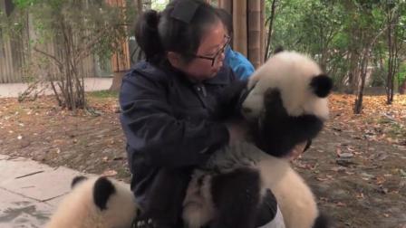 这帮人竟然抱着熊猫取暖, 而我连摸都没摸过, 差距也太大了