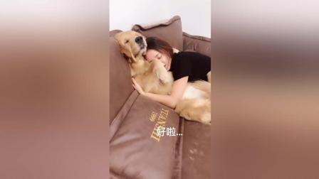 这个狗狗厉害了, 被主人打一顿听话了吧