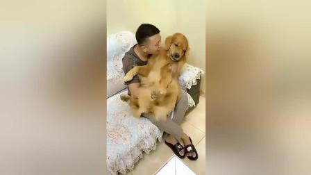 这狗狗的待遇真的太好了, 竟然要哄着睡觉