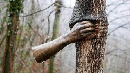 世界上最孤独的手, 紧握一颗树长达50年, 却从来没有松开过!