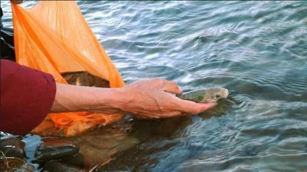 为什么西藏羊湖有几亿斤的鱼, 却没有人敢去捕捞?