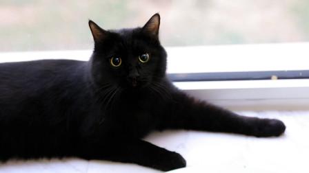 养一只纯黑猫是怎样的体验? 黑天白天两幅面孔!