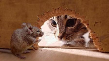 真实版猫捉老鼠